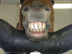 John's Horsey Smile
