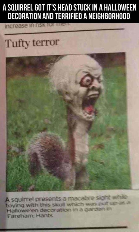 squirrel horror