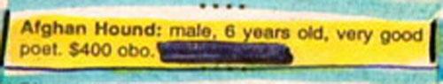 classified ad 31