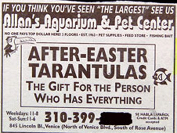 classified ad after Easter Tarantulas