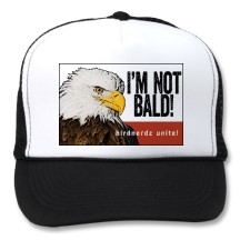bald_eagle_im_not_bald