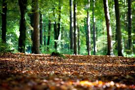 "Image result for Duff"" is the decaying organic matter found on a forest floor"