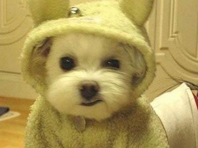 funny_animals 24