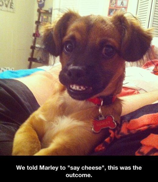 funny_animals 26