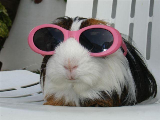 funny_animals 29