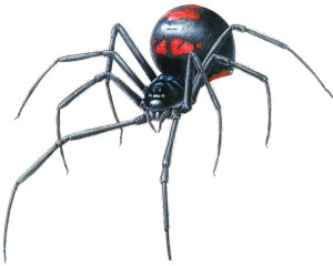 Black_widow_Spider