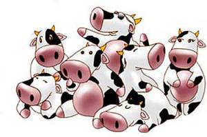 cartoon-dairy-cows