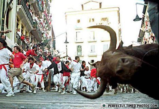 ptp bull