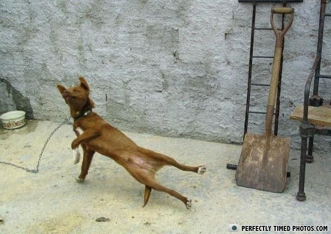 ptp doggy-breakdance