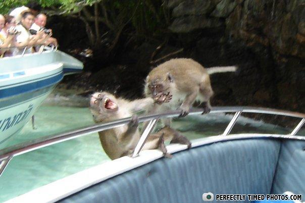 ptp Monkey_Bites