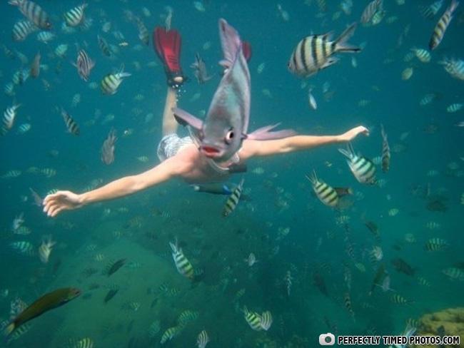 ptp oi fishface