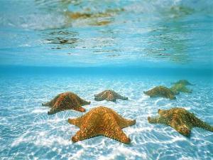 starfish-2