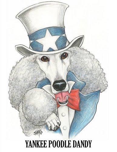 Yankee Poodle Dandy