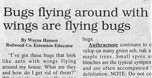 np_bugs