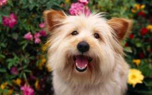 Pet-Care-Dog