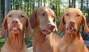 redneck dogs