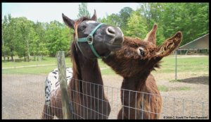 horse and donkey in love