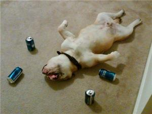 Most Funny Drunk Animals (5)