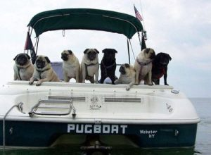 picture pun 011 Pugboat