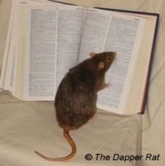 dictionary rat