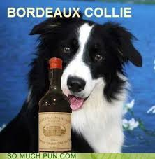 Bordeaux collie