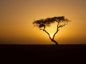 the world's most isolated tree