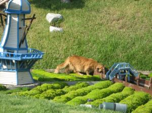 feral cats live in Disneyland