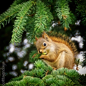 mister red squirrel's lunch