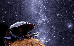 Dung beetles can use the Milky Way to navigate