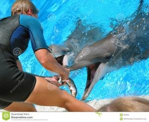 feeding-dolphins