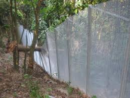 trees growing over fence