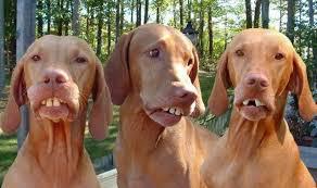 redneck-dogs