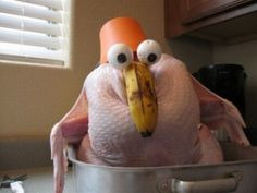 funny turkey photo