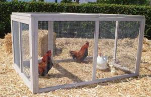 chickens in pen