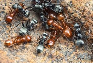 ant-slavery