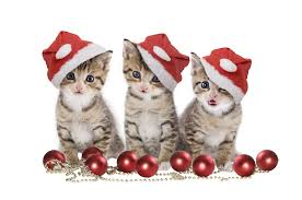 cats at christmas