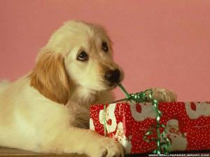 dogs get Christmas gifts