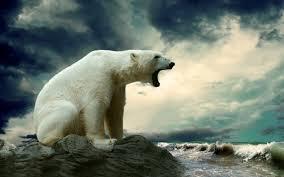 polar bear does not hibernate
