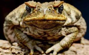 roomy-toad arthritis