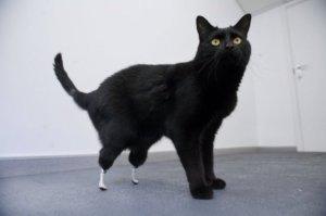 Bionic-Cat