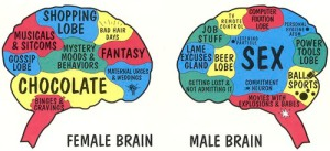 female-brain-male-brain
